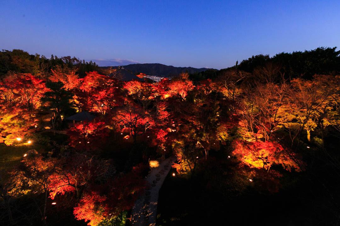 ライトアップされた青龍殿を撮影した写真