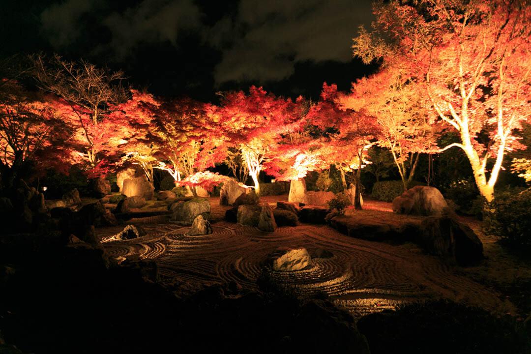 ライトアップされた庭園を撮影した写真