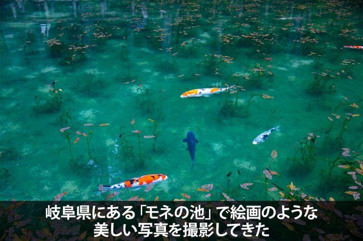 岐阜県にある「モネの池」で絵画のような美しい写真を撮影してきた