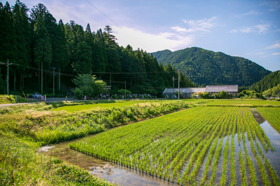 根道神社へ向う人々を撮影した写真
