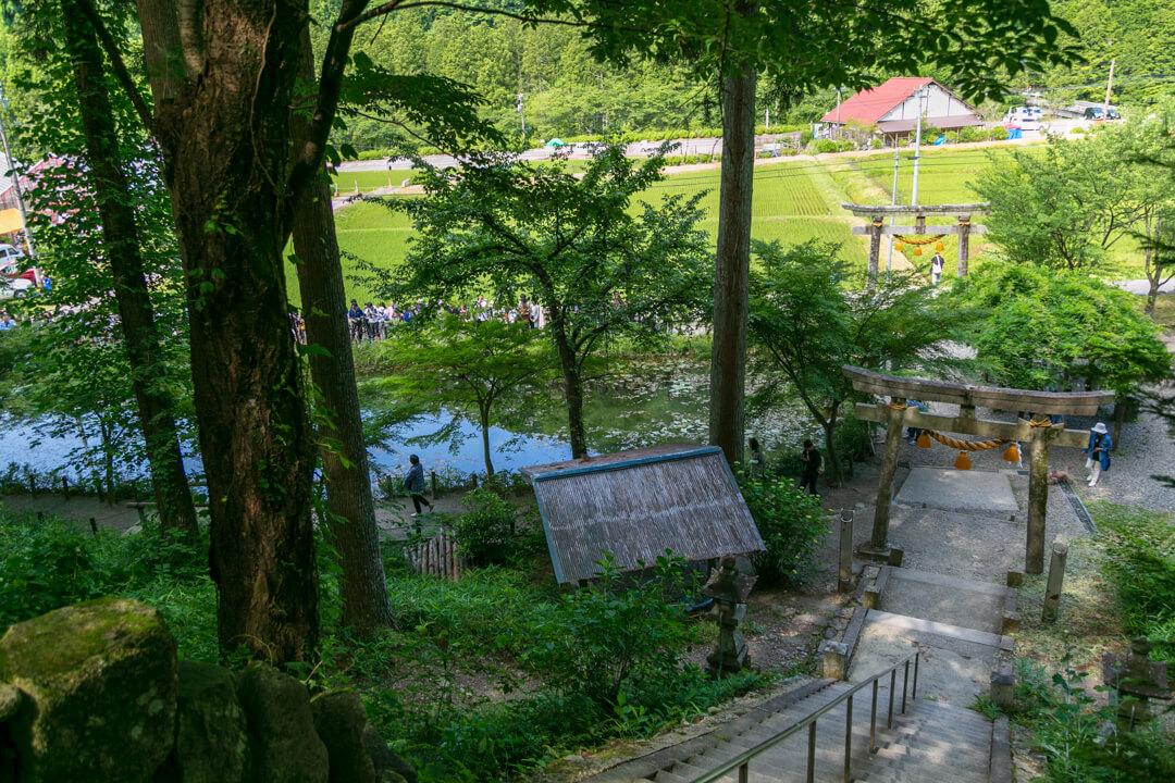 モネの池を俯瞰して撮影した写真