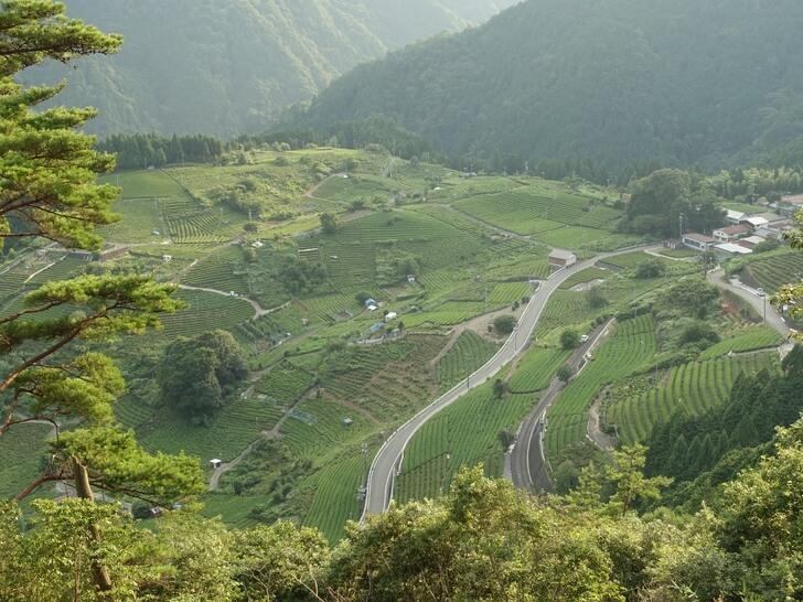 天空の遊歩道から見た天空の茶畑の写真
