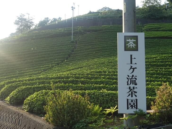 天空の茶畑の看板の写真