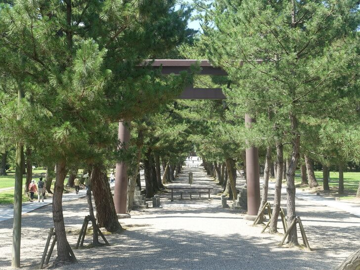 出雲大社の松の参道の写真