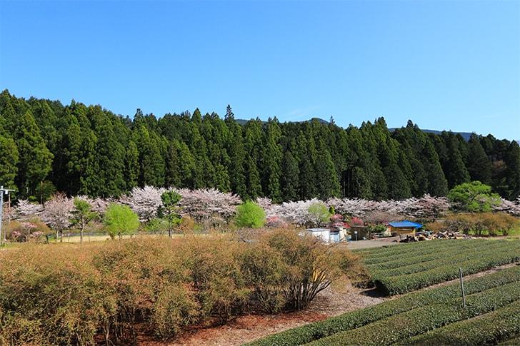 大井川鉄道の蒸気機関車の車窓からの撮影した風景の写真