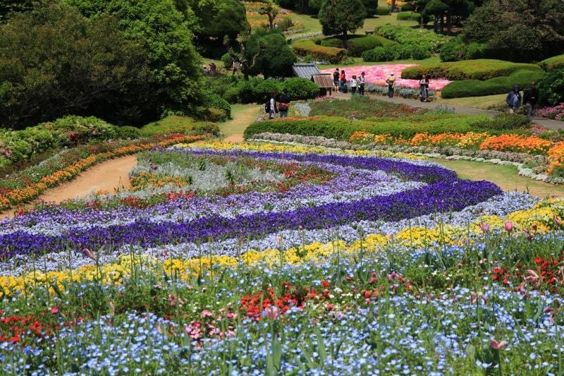 能古島アイランドパーク内の花たちの写真