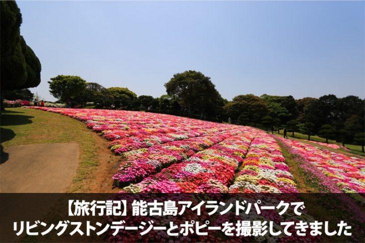 【旅行記】能古島アイランドパークでリビングストンデージーとポピーを撮影してきました
