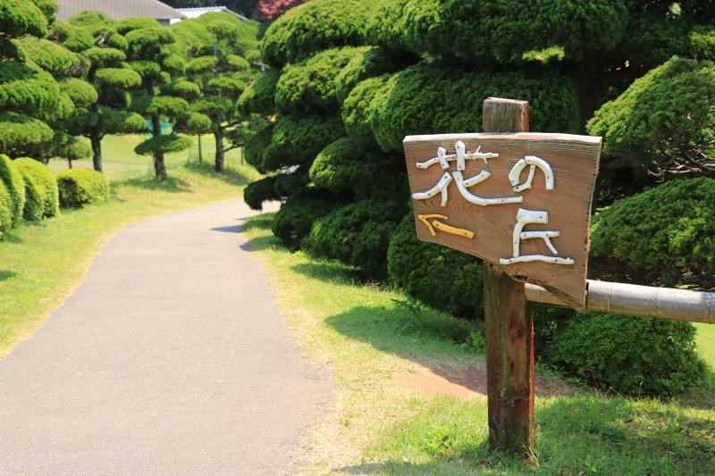 能古島アイランドパーク・花の丘の写真