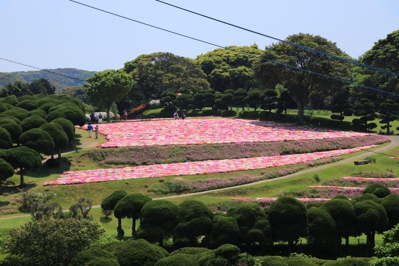 能古島アイランドパーク・リビングストンデージーの写真