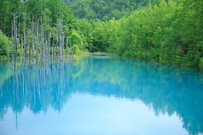 美瑛の白金青い池の写真