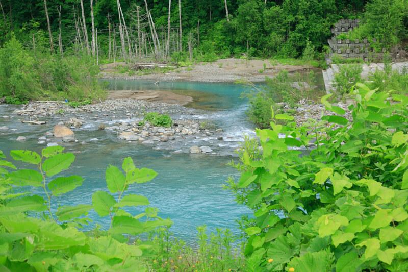 美瑛の白金青い池の付近を流れる川の写真