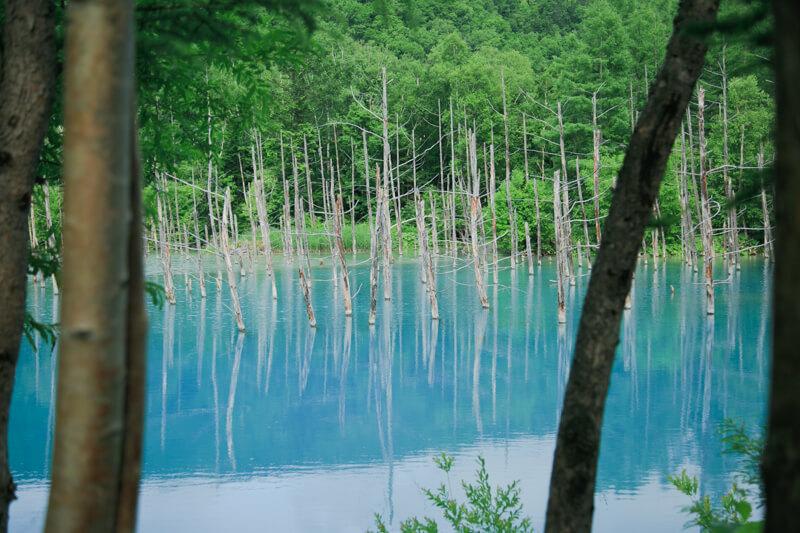 木の陰からみた青い池の写真