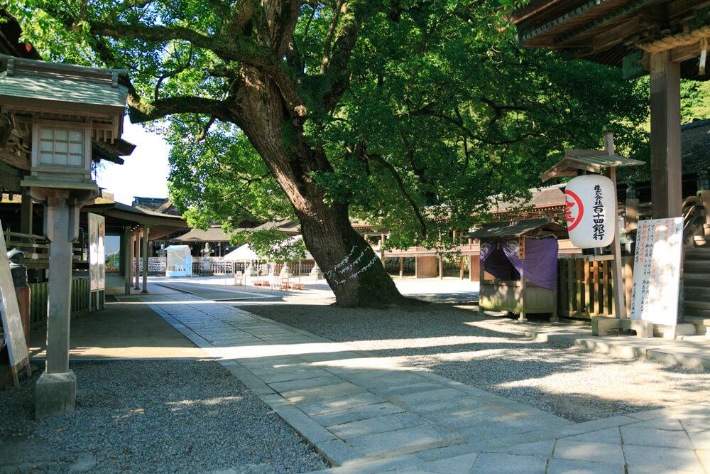 御本宮の隣りにある神木(クスノキ)の写真