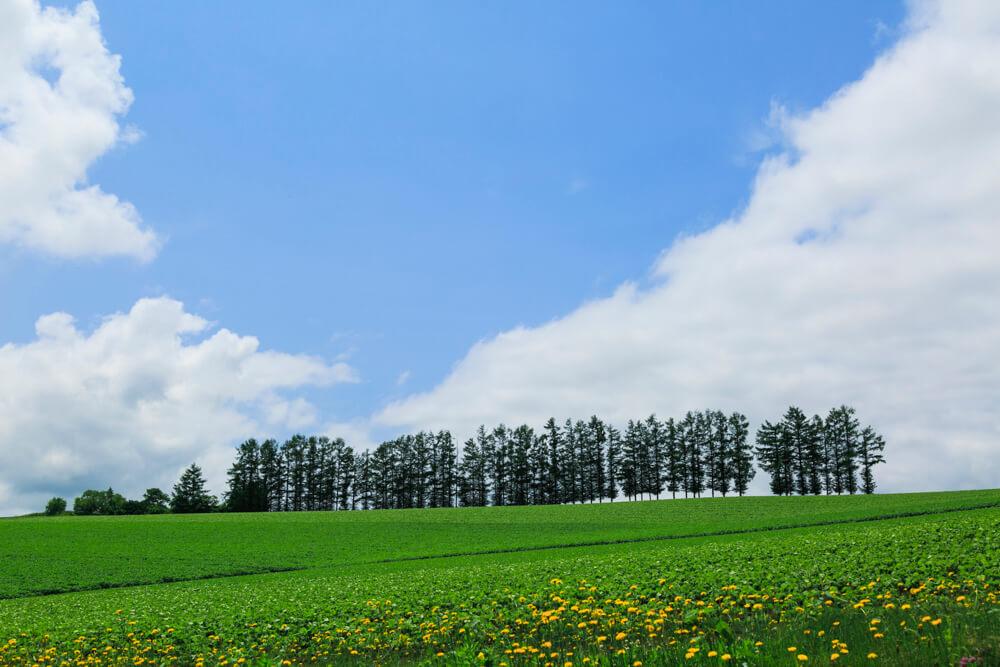 マイルドセブンの丘の写真