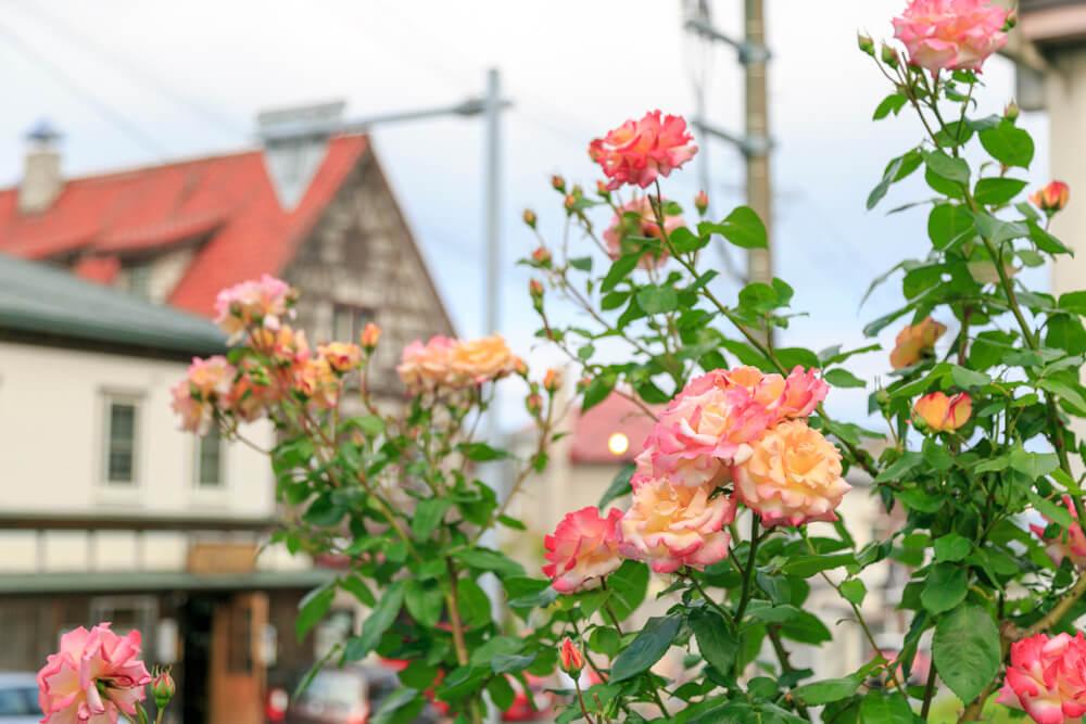 元町エリアに咲く花の写真