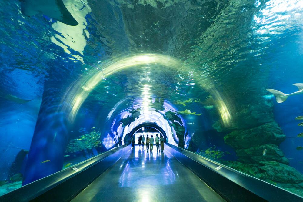 アクアパーク品川の海中トンネル「ワンダーチューブ」を撮影した写真