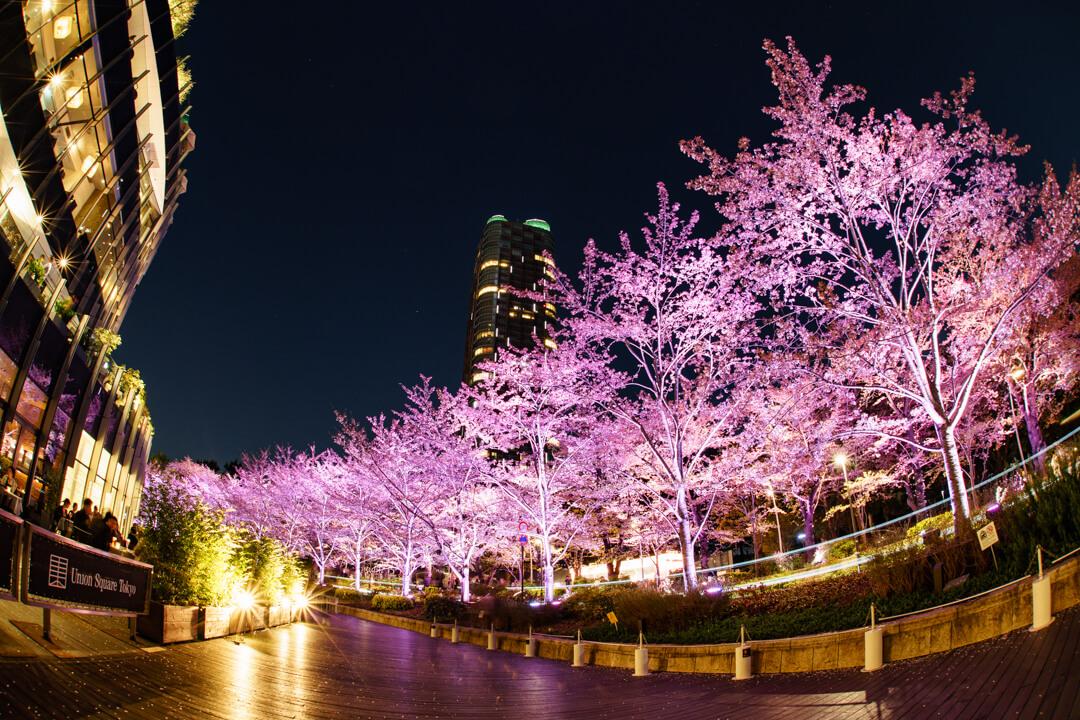 魚眼レンズで撮影した東京ミッドタウンと夜桜の写真