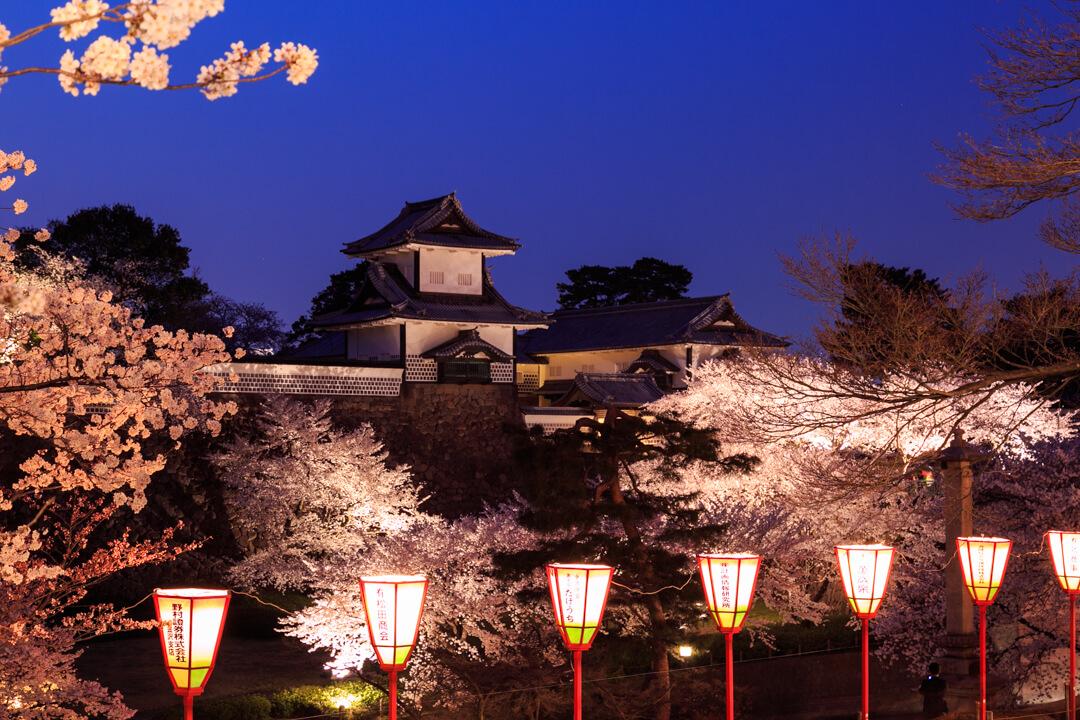金沢城と夜桜の写真