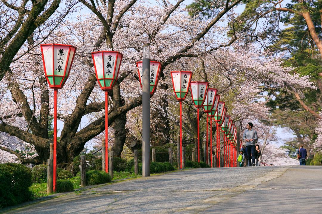 兼六園のそばに咲く桜の写真