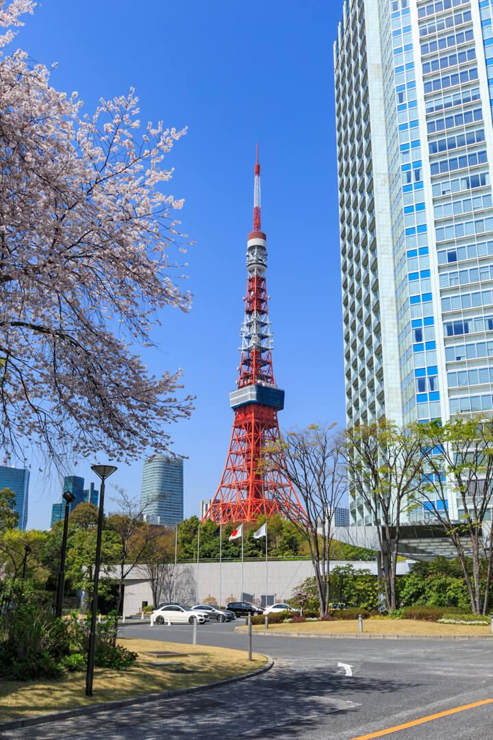 プリンスパークタワー東京と桜で東京タワーを挟んだ構図の写真