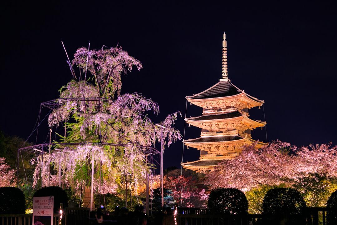 東寺と不二桜の写真