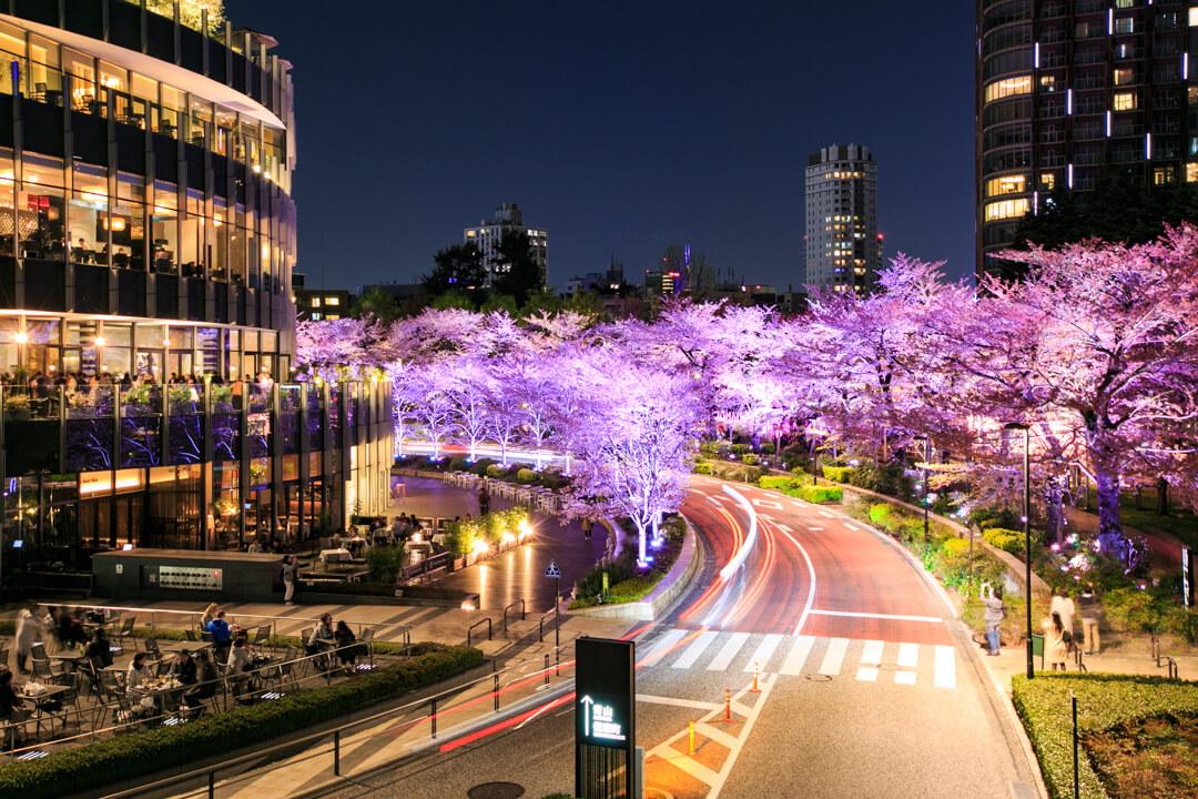 東京ミッドタウンの桜のイルミネーションの写真