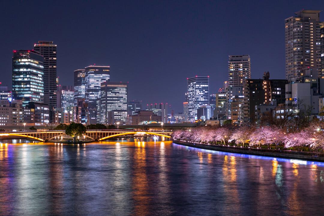 天満橋の上から撮影したビル群と夜桜の共演